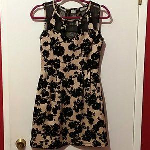 Black and Cream felvet flower print dress
